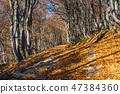 Autumn landscape in Bieszczady Mountains, Poland 47384360