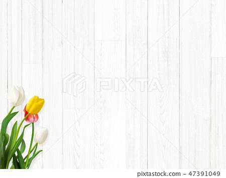 Background - White wall - Wood grain - Shiraki - Spring - Tulip 47391049