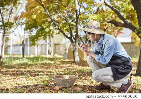 농부,농업,시골,청년,귀농,수확,재배,과일,사과 47400030