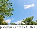 初夏藍天和新鮮的綠樹 47403633