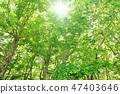 Fresh green forest Warm sunshine 47403646