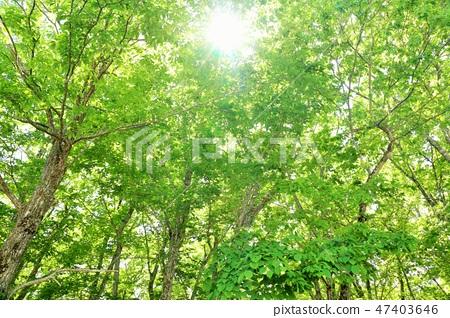 신록의 숲 따뜻한 햇빛 47403646