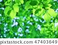 신록의 숲 신록의 나뭇잎 47403649