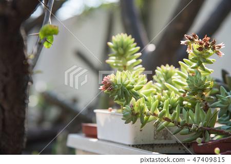 多肉植物花園盆栽 47409815