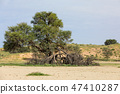 Kalahari desert South Africa wilderness 47410287