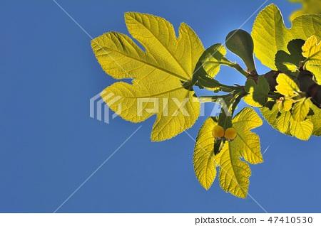 停留花植物的逗人喜愛的龍蝦,台灣 47410530
