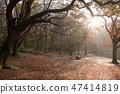 British autumn leaves fall 47414819