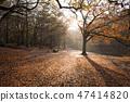 British autumn leaves fall 47414820