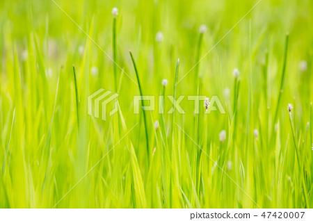 꽃 식물 자연 녹색 단풍 47420007