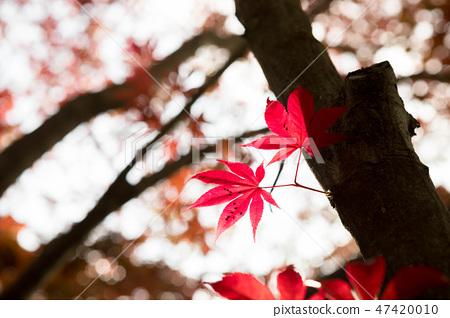 꽃 식물 자연 녹색 단풍 47420010