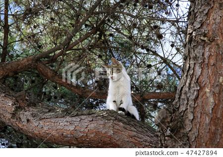 고양이 먹이 사냥 47427894