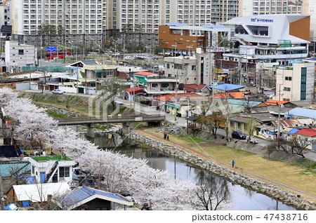 대동천 벚꽃 산책로 47438716