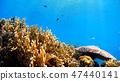오키나와 토카 시키 섬의 渡嘉 씩 해변 수중 사진 47440141