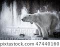 Polar bears 47440160