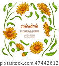 calendula elements  vector set 47442612
