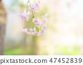Cherry Blossoms 47452839