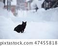 눈 속에서 검은 고양이 47455818
