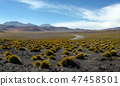 Small patches of grass in the desert of Bolivia 47458501