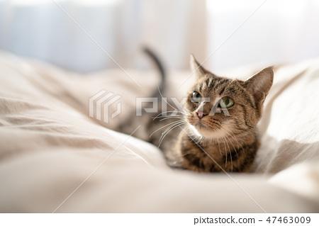 溫暖的貓4 47463009