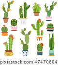 Cactus pots. Home plants cacti flowers in ceramic pot succulent plant, cactuses with prickles flora 47470604