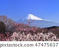 梅花和富士山-222445 47475637