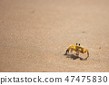 Funny cute crab crawling at the beach sand alone 47475830
