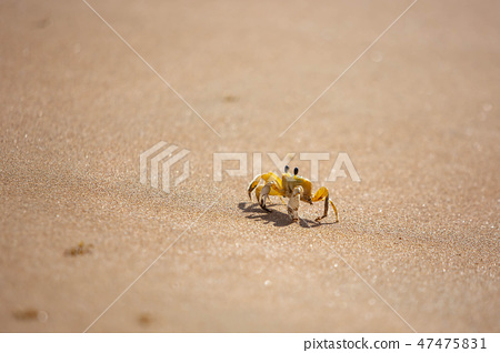 Funny cute crab crawling at the beach sand alone 47475831