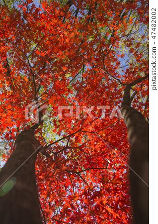 Colorful autumn landscape in park 035 47482002