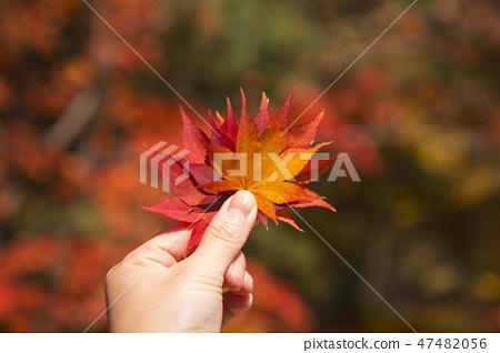 Colorful autumn landscape in park 010 47482056