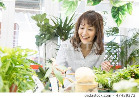 인테리어 관엽 식물 원예 47489272