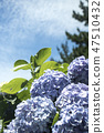 수국,꽃,식물 47510432