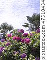 수국,꽃,식물 47510434