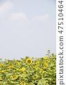 해바라기,꽃,식물 47510464
