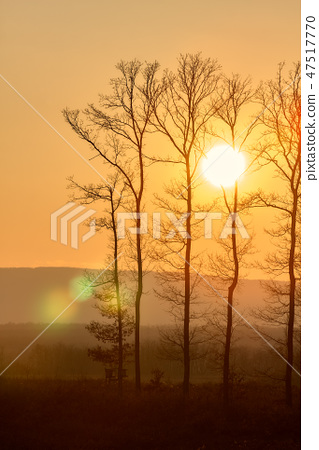 Beautiful sunset light and trees silhouette 47517770