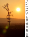 Beautiful sunset light and trees silhouette 47517771