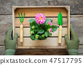 Hands of gardener in gloves hold a box with flower 47517795