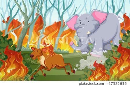 Animals run away from wildfire 47522656