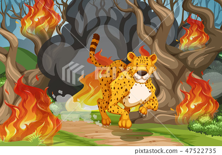 Tiger run away from wildfire 47522735