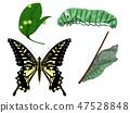 호랑 나비의 성장 47528848