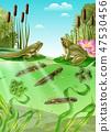 Frog Life Cycle Realistic Image 47530456