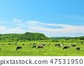 홋카이도 푸른 하늘과 광대 한 목장 풍경 47531950