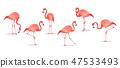 Set of exotic flamingos isolated on white background. Flamingo Isolated on white. Pink flamingo 47533493