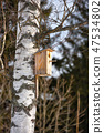 Wooden birdhouse on a birch tree in early spring 47534802