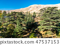 The Cedars of God at Bsharri in Lebanon 47537153
