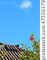 ท้องฟ้าสีฟ้าโอกินาว่าทาเคะโทมิจิมะต้นพู่ระหงและกระเบื้องหลังคา 47556379