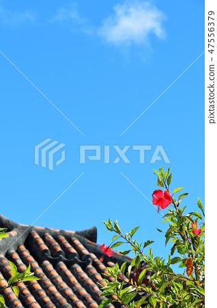 오키나와 다케 토미 시마 푸른 하늘과 히비스커스와 기와 47556379