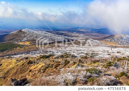 한라산 영실 풍경 47556878
