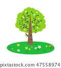 ต้นไม้และดอกไม้ 47558974