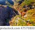 전라남도 순창군 강천산군립공원 가을 단풍과 출렁다리 47570800