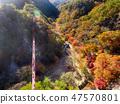 전라남도 순창군 강천산군립공원 가을 단풍과 출렁다리 47570801